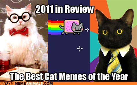 The Best Cat Memes - introducing our newest site meme animals cheezburger