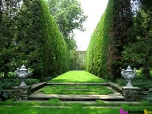 Backyard Hedge Ideas Plantingbetterdecoratingbible