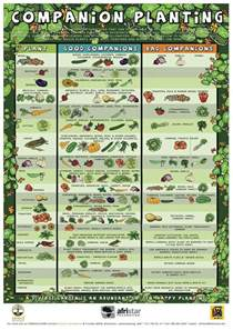 gardening companion planting chart realfarmacy