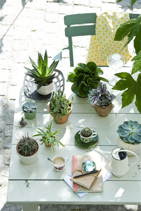 4 zomerse plantenidee 235 n mooi wat planten doen