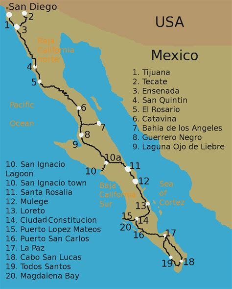 whale watching programs baja mexico dive discovery