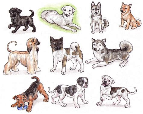 dog breed drawings dog breeds picture