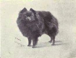 origin of pomeranian everything about your pomeranian my dogs