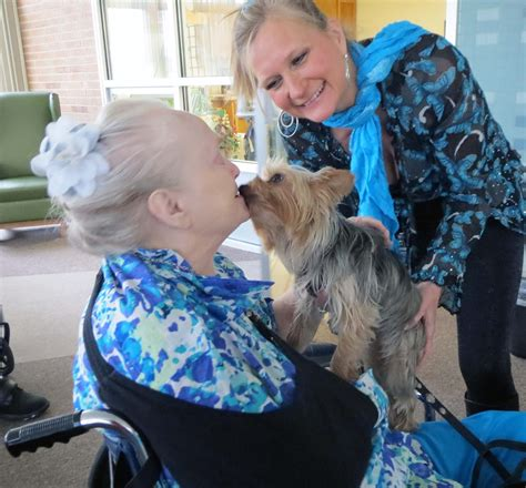 therapy dogs for sale small therapy dogs for sale images