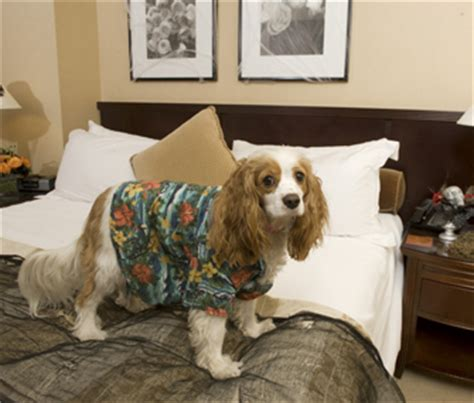 hotels that accept dogs the six best hotel chains that allow dogs