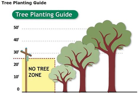 help paying electric bill in ma tree planting guide