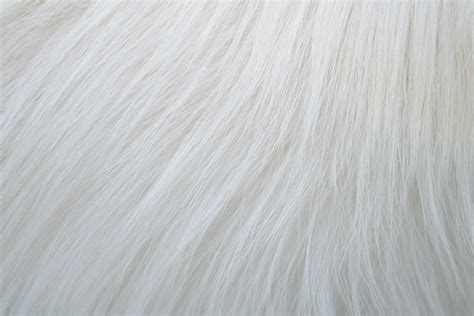 white hair pattern 6 dog fur textures outside the fray drawing texture