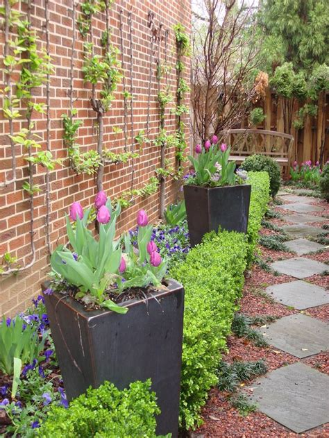 12 best narrow walkway plantings images on pinterest gardening landscaping ideas and narrow