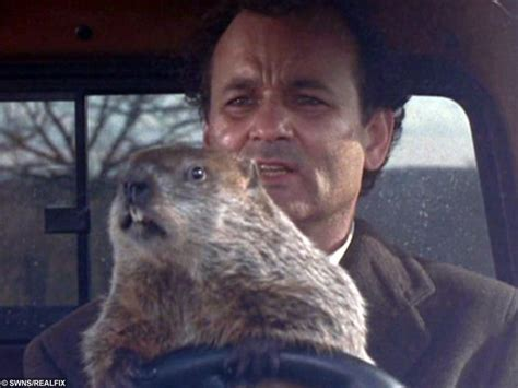 groundhog day type it s groundhog day again 13 facts to celebrate 130 years