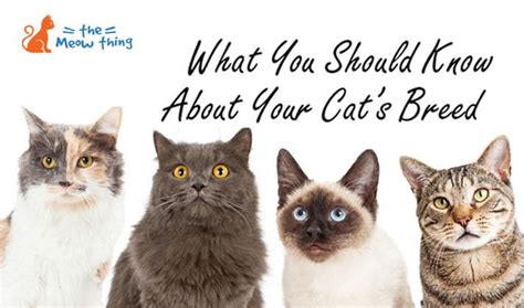 what breed of are you what breed is my cat list of cat breeds by their features