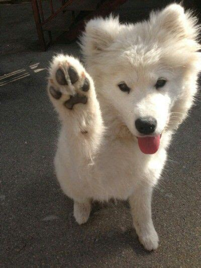 puppy high five high five to the and shake on