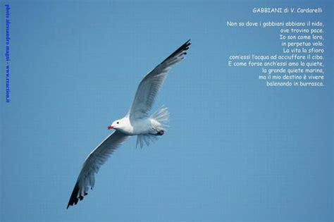 il gabbiano jonathan livingston ebook jonathan livingston seagull epub