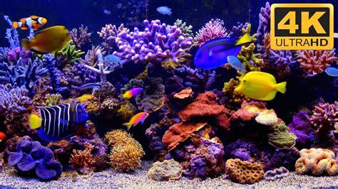 aquarium  wallpaper aquarium fishes  fish tank