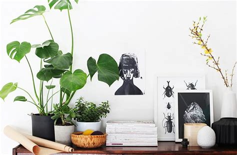 indoor plant decoration 8 super cute indoor plants to buy now brisbane the