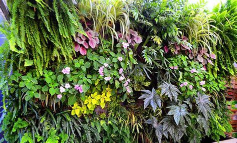 decorar jardin con plantas deserticas las mejores plantas para jardines verticales