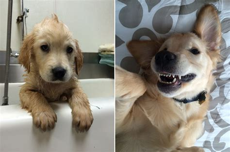 puppy braces this puppy had to get braces and the can t handle it metro news