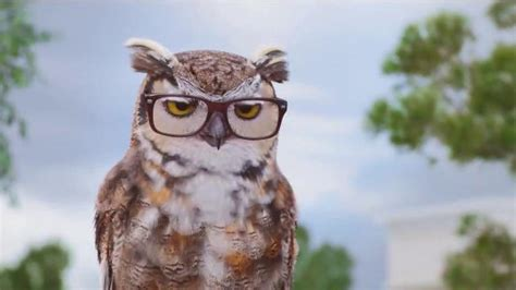 American Eyeglasses Owl Commercial | who is the actor in the americas best contacts commercials