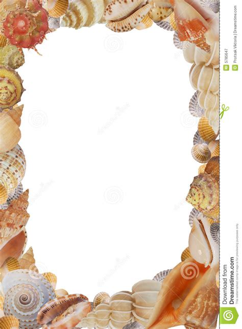 frame  sea shell royalty  stock photography