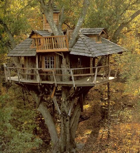 quick home design tips 17 best images about tree houses on pinterest trees a