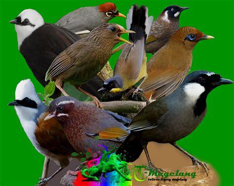 download mp3 suara adzan indonesia download mp3 suara burung poksay lengkap timkicau