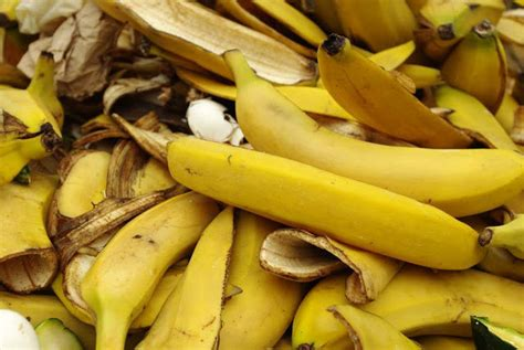 Jual Starbio Plus Di Medan kulit pisang sebagai pakan ternak peternakankita