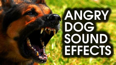 angry dog bark growl sound effects high quality youtube