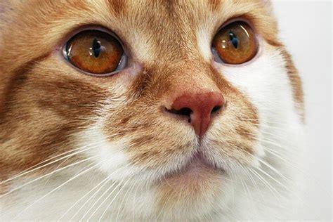 Pasir Zeolite Untuk Kucing 9 perawatan harian yang wajib diberikan untuk kucing