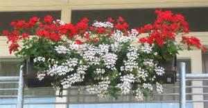 winterharte blumen für den garten pvblik bepflanzung balkon idee