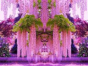 wisteria in japan purple wisteria japan most beautiful places in the world