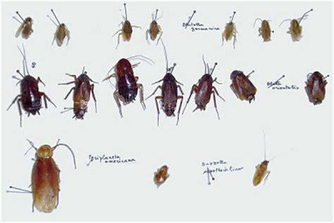 insetti nel materasso aeroflot blatte