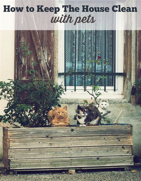 how to keep house how to keep your house clean with a pet simply southern mom