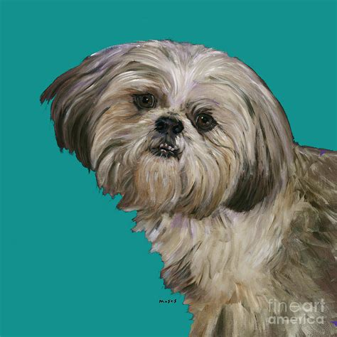 shih tzu painting shih tzu on turquoise painting by dale moses