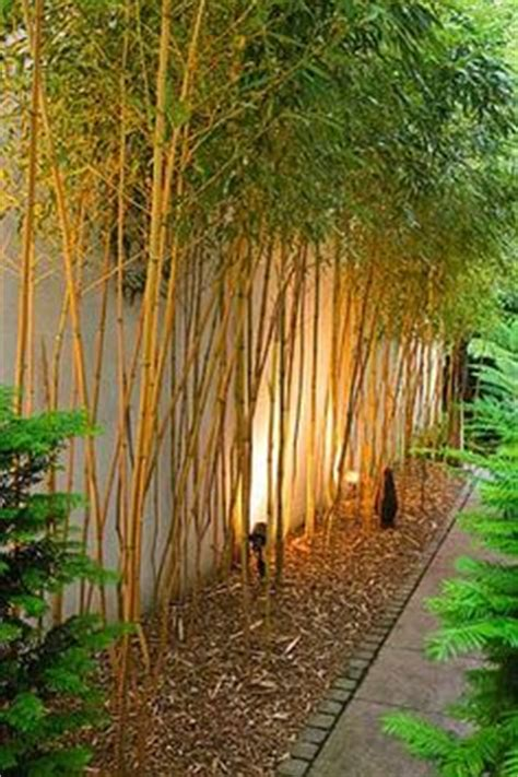 bamboo trees for backyard the best 10 plants to grow for backyard privacy