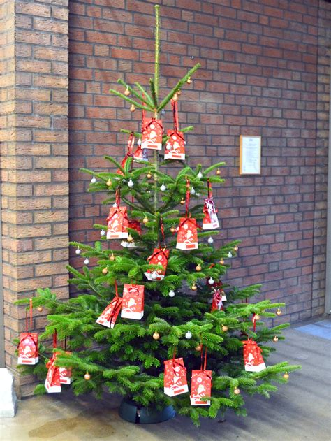 ecological christmas trees gfa gfa certification creates fsc standard for ecological trees