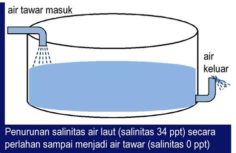 Bibit Bandeng Air Tawar fadhly s fisheries extension penggelondongan bandeng di