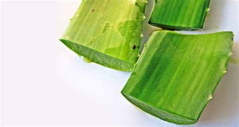 gel for plants aloe vera gel for skin how to make your aloe vera mask