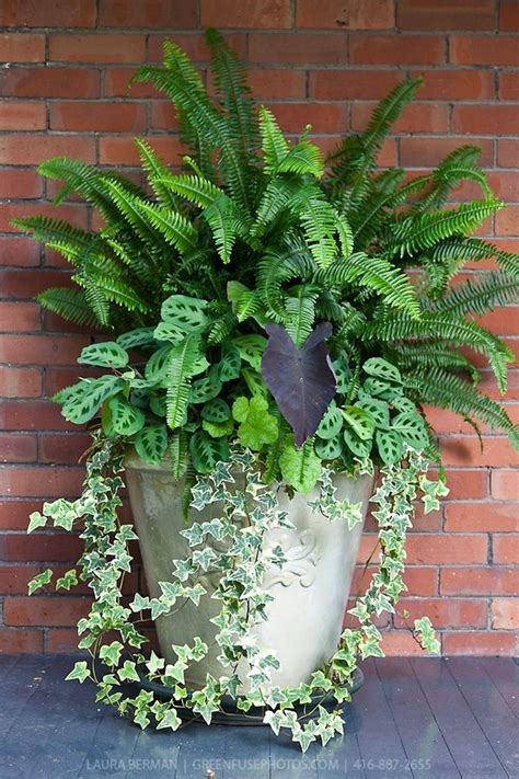 plants for container gardens fern container garden garden inspirations