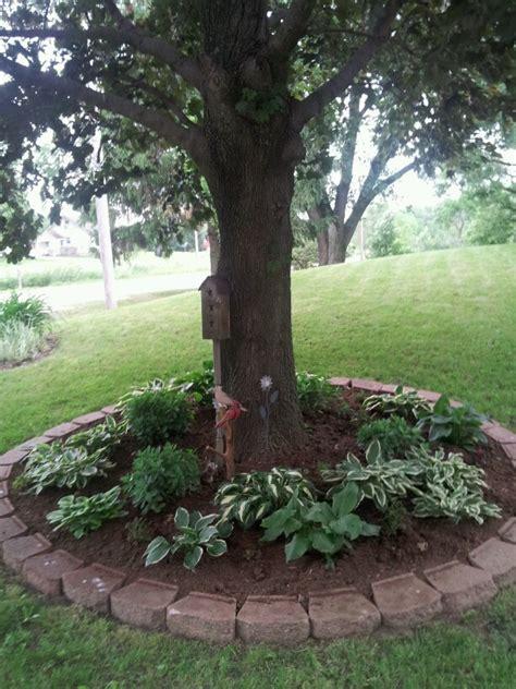 Hosta bed under tree   Fresh Gardening Ideas