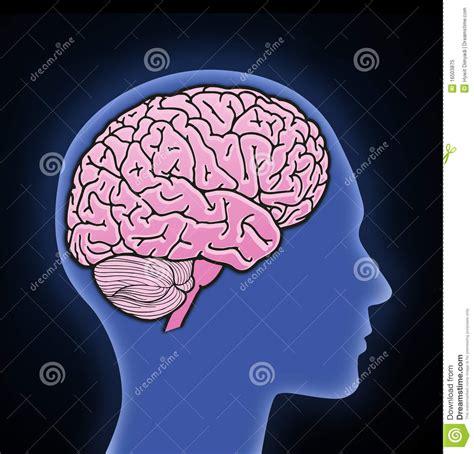 illustration  human brain royalty  stock photo