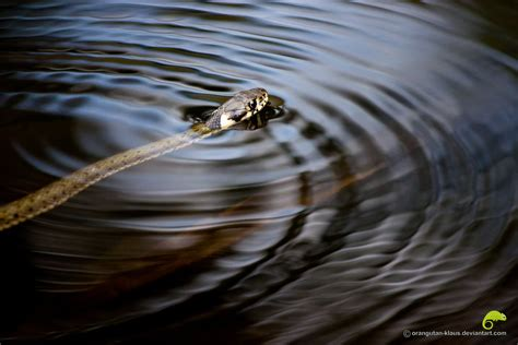 snake for bathtub snake bath tub by orangutan klaus on deviantart