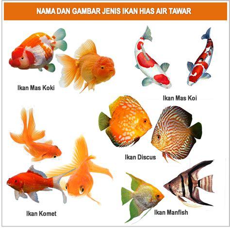 Bibit Ikan Gurame Hias jenis ikan hias air tawar yang bisa dicur pada satu