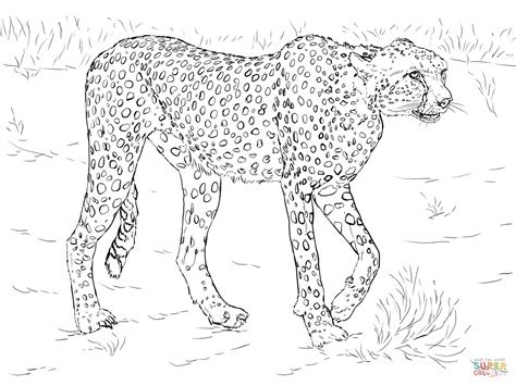 running cheetah coloring page free printable coloring pages cheetah coloring page free printable coloring pages