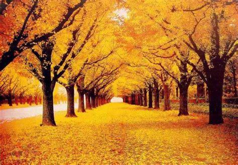 pretty walls download beautiful trees hd wallpapers free beautiful scenery wallpapers hd pictures one hd