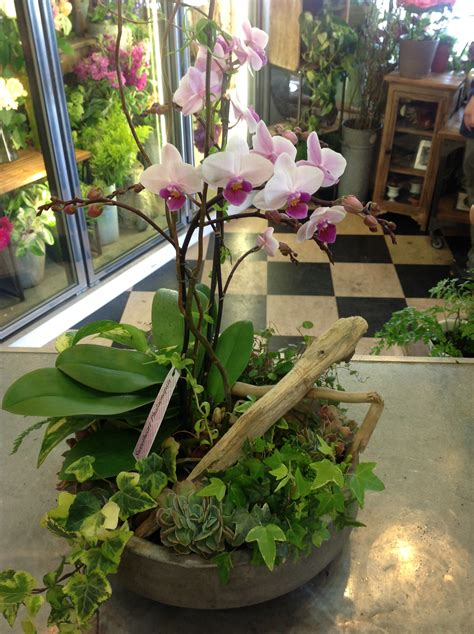 Orchid Planters Pots by Orchid Pot Orchid Planter