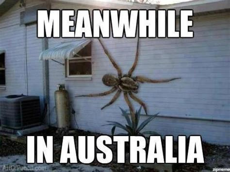 Kill Spider Meme - meanwhile in australia lolntroll