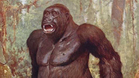 bigfoot west coast a history of gorillas and other monsters in california oregon and washington state books apes in the woods a bigfoot study