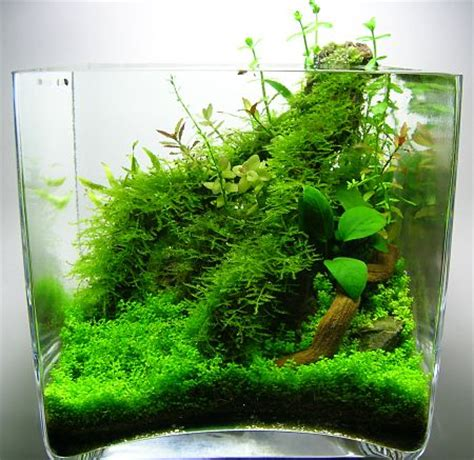 Nano Aquascapes by Gardens Glasses And Jungles On