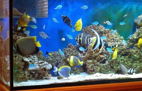 acquario per casa prezzi acquario allestimento accessori casa decorazione acquari
