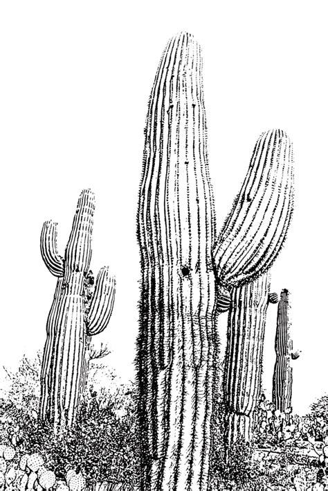 saguaro coloring pages