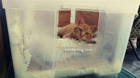 gatos en casa como hacer casas de invierno para gatos fotos